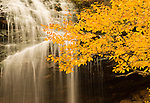 Water cascades over Beulach Ban Falls, with fall colors in the foreground, Cabot Trail, Cape Breton, Nova Scotia, Canada.  Photo by Gus Curtis.