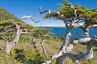 Island landscape on Ingot Island, Prince William Sound, Alaska. Chugach mountains to the north.