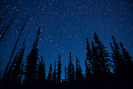 Stars and the Big Dipper on top of Deer Park, Olympic National Park.