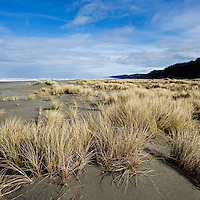 Dune Grass, Gold Bluffs beach, Prairie Creek Redwoods state park, California