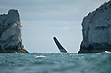 10th August 2011. Cowes. Isle of Wight..Pictures of Hugo Boss rounding the Needles, skippered by British offshore racer Alex Thomson, with Ewan Mcgregor onboard during The Artemis Challenge round the Island race...Aberdeen Asset Management Cowes Week 2011...Credit: Lloyd Images.
