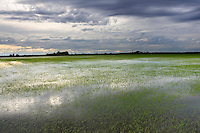 A storm passes over a Rice Field near Oroville, CA.