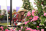 Alice Dunn a blogger admires Roses at the RHS Hampton Court Flower show, London 29.6.15<br /> <br /> <br /> Bethany Clarke / RHS