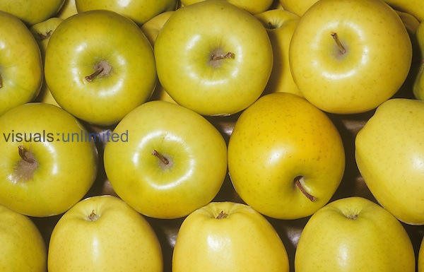 Apple variety Golden Delicious (Malus domestica), native to Asia Minor.