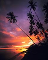 Kapuaiwa Palm Grove, Island of Molokai, Hawaii