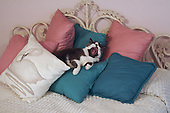 Tabby cat yawns on a pile of pillows.