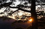 Sunrise and tree, Sierra Nevada, Eldorado National Forest, California