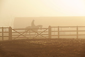 Early morning horse training at a manege in Epping just outside London in the so called green belt.