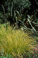 Carex elata 'Bowles' Golden' with Phormium tenax (Purpureum Group)  (GR4128), Geranium sanguineum 'John Elsey'