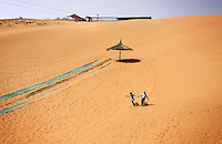 Tourists running down a huge sand dune in the Shapotou Tengger desert resort near the city of Zhongwei, in Ningxia Province. The park was established next to a Chinese Academy of Sciences research station, involved in studies investigating desertification control measures. The Shapotou park draws thousands of visitors who ride camels, do sand sliding and take boat rides on the nearby Yellow River.