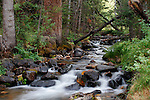 Lehman Creek flows through Great Basin National Park near the Lower Lehman Creek campground. The waters of Lehman Creek are fed by the melting glacier that lies below Wheeler Peak. Great Basin National Park is located in east central Nevada, five miles west of the town of Baker. Photographed 08/07