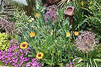 Gaillardia, iceplant alliums and other perennials create a collage of foliage iDan Johnson's Denver garden.