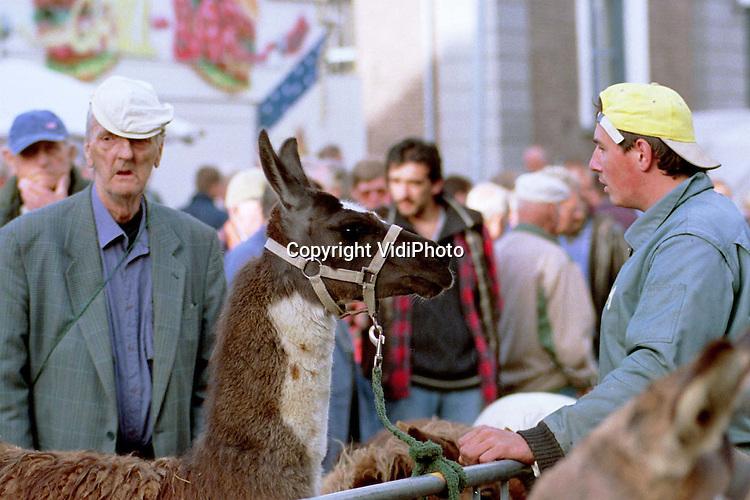 Foto: VidiPhoto..ELST - In het Betuwse Elst werd maandag de jaarlijkse paardenmarkt gehouden. Vele duizenden bezoekers kwamen op het evenement af dat, volgens de politie, nauwelijks incidenten kende. Honderden pony's werden door Italiaanse handelaren opgekocht voor de vleesindustrie. De Italianen komen naar Nederland omdat de prijs van pony's hier laag ligt. De paardenmarkt in Elst is een van de oudsten van Nederland en dateert van de vroege middeleeuwen. Foto: Een vreemde eend in de bijt. (Meer info via: 0481-362395)