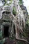 Unlike most Angkori temples, Ta Prohm has been left in similar conditions in which it was found - the atmospheric combination of trees growing out of the ruins and the jungle surroundings have made it one of Angkor's most popular temples with visitors.  This scene was used in the movie &quot;Indiana Jones &amp; the Tomb Raiders&quot;