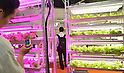 May 30, 2012, Tokyo, Japan - Heads of lettuce are grown under LED lights on a bio farm in a smart agriculture project jointly developed by Panasonic and University of Chia during the Smart Grid Exhibition 2012 in Tokyo on Wednesday, May 30, 2012. (Photo by Natsuki Sakai/AFLO) AYF -mis-