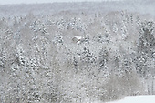 snow covered house in forest