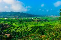 Lush, terraced farmland, Sudal, Kathmandu Valley, Nepal.