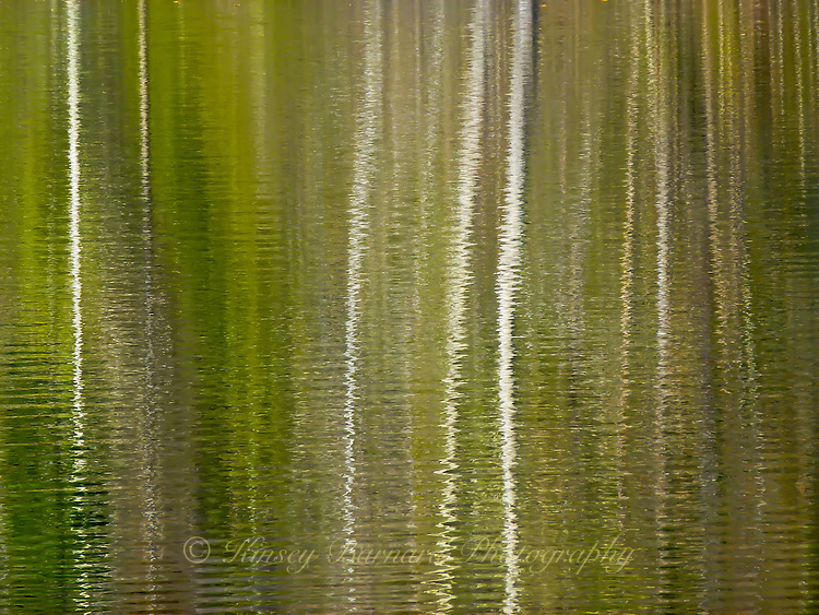 &quot;PONDERING ASPEN&quot;<br /> <br /> Leafless aspen reflecting in the rippling waters of a Montana pond. ORIGINAL 24 X 36 GALLERY WRAPPED CANVAS SIGNED BY THE ARTIST $2,500. CONTACT FOR AVAILABILITY.