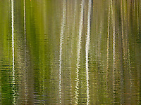 Leafless aspen reflecting in the rippling waters of a Montana pond.