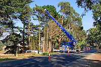 Mobile crane working on tree clearing. <br />