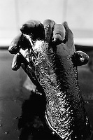 Azerbaijan. Baku region. Baku. Health center. Bathtub. Hands filled with petrol. An ancient treatment to cure various ailments, such as arthritis and soreness. © 2007 Didier Ruef