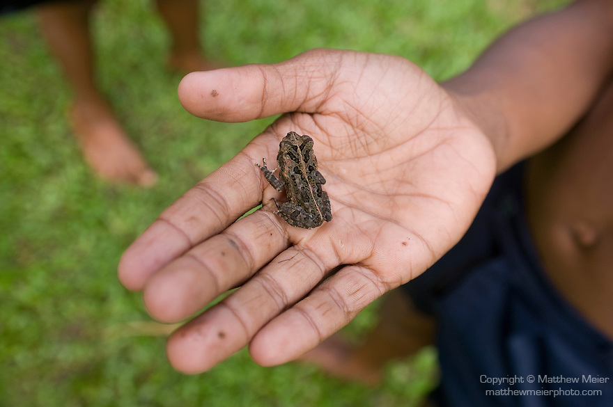 Bouma National Heritage Park and Tavaro Waterfalls, Taveuni, Fiji; a young local boy holds a small Cane Toad in the palm of his hand