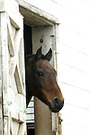 Horse looks out Amish barn Pennsylvania USA, barn, farm, Fine art and stock photography by Ronald T. Bennett Photography ©, RonBennettPhotography.com, RonBennettPhotography.net, Fine Art Photography by Ron Bennett, Fine Art, Fine Art photography, Art Photography, Copyright RonBennettPhotography.com © Fine Art Photography by Ron Bennett, Fine Art, Fine Art photography, Art Photography, Copyright RonBennettPhotography.com ©
