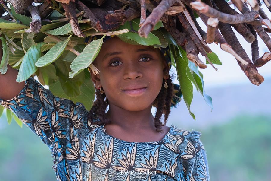 Little fulani girl collecting firewood