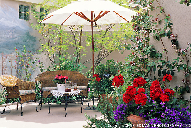 A small patio  in Arizona becomes a world iunto itself when an mural is added to the wall aththe hime of Dorothy Kilburg.
