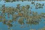 Aerial - Flooded Strzelecki Desert in Coongie Lakes National Park