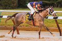 01-02-17 Jerome Stakes Aqueduct