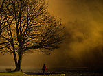 A person standing beside a tree under a stormy sky