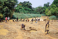 Tortiya, Ivory Coast (Cote d'Ivoire).  Sifting for Diamonds along a Small River Bed.