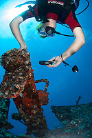 Diver at the St Anthonys wreck taking a picture of a Comerson frog fish.