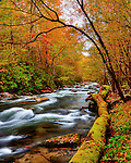 Fall colors blaze along the Little River in the Tremont section of the Great Smoky Mountains National Park. Smoky Mountain photos by Gordon and Jan Brugman.