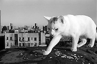 Cat on roof East 7th Street, Alphabet City, NY 1989