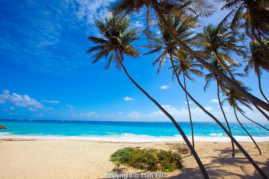Bottom Beach, Barbados, Caribbean Sea, Atlantic Ocean, One of the Caribbean's most beautiful beaches, Lesser Antilles