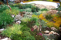 Evocative use of heaths & heathers, stone = Burns Country. Design by Gaia Adair. Calluna and Erica, ornamental grasses, drought tolerant, patio, wall, trees, shrubs, mixture of colors and textures in the garden scene landscaping