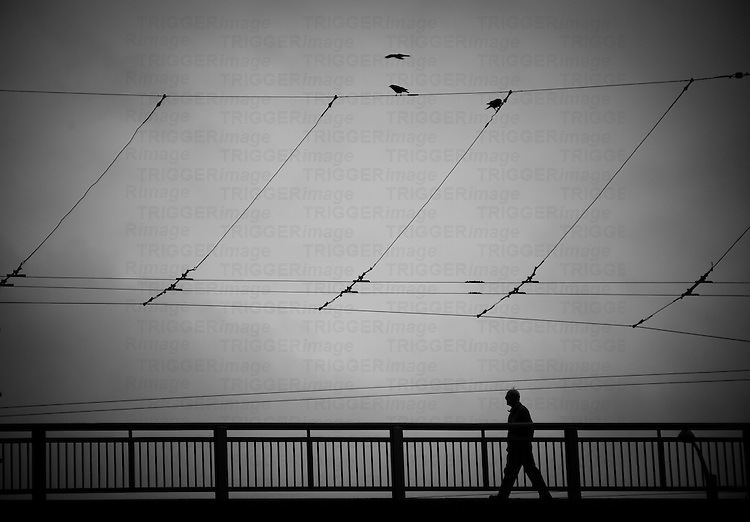 A man walking across Granville Street bridge in the middle of the city. Wires from trolley buses above his head with ravens flying throughout them.