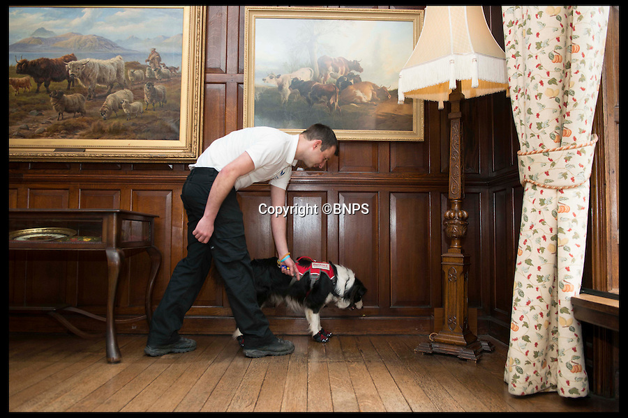 BNPS.co.uk (01202 558833)<br /> Pic: LauraDale/BNPS<br /> <br /> Mark Doggett with his dogs Meg who can sniff out dry rot.  At Bantock House Museum.<br /> <br /> New tricks for old dog breeds...<br /> <br /> Enterprising Mark Doggett has come up with a new business idea that's not to be sniffed at...A team of crack pooches that use thier noses to find dry rot in old houses.<br /> <br /> And he now has plans to train the cunning canines to hunt out bed bugs for hotel chains as well.<br /> <br /> Sniffer dogs have been trained to detect the destructive fungi early and in areas humans can't access, meaning they could save people thousands of pounds of expensive damage.<br /> <br /> There are even plans to train the dogs to detect bed bugs, which could prove a huge help to hotels, hospitals and boarding schools.<br /> <br /> Mark Doggett, 30, started his business Enviro-dogs last year and it is the only company in the country people can hire to check properties for dry rot.