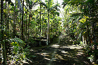 Old Traditional Path Between Palms, Yap Micronesia(Photo by Matt Considine - Images of Asia Collection)