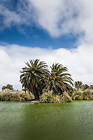 Palm trees and grasses on an island in a man-made lake in an urban park.
