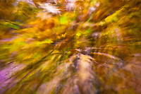 Autumn leaves seem to fly toward the lens.