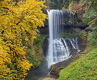 Silver Falls State Park, OR: Middle North Falls (106 ft) in Silver Creek Canyon in fall