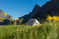 Wild camping among summer wildflowers at Horseid beach, Moskenesøy, Lofoten Islands, Norway