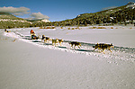 California: Tahoe area in winter.  Dog sledding. Photo calski103..Photo copyright Lee Foster, 510/549-2202,  lee@fostertravel.com, www.fostertravel.com