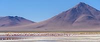 Flamingoes wade in Laguna Colorada at 14,035 feet above sea level.
