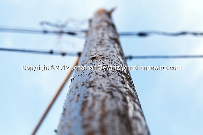 A close view looking up a wooden utility or telephone pole.