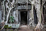 Tree roots cover a temple at Ta Prohm in Angkor Thom, Cambodia. June 7, 2013.