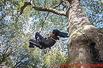 Calling Tree - Rosemary Lee & Simon Whitehead, Bloomsbury  6th October 2016